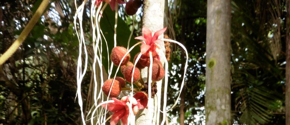 Treeflowers