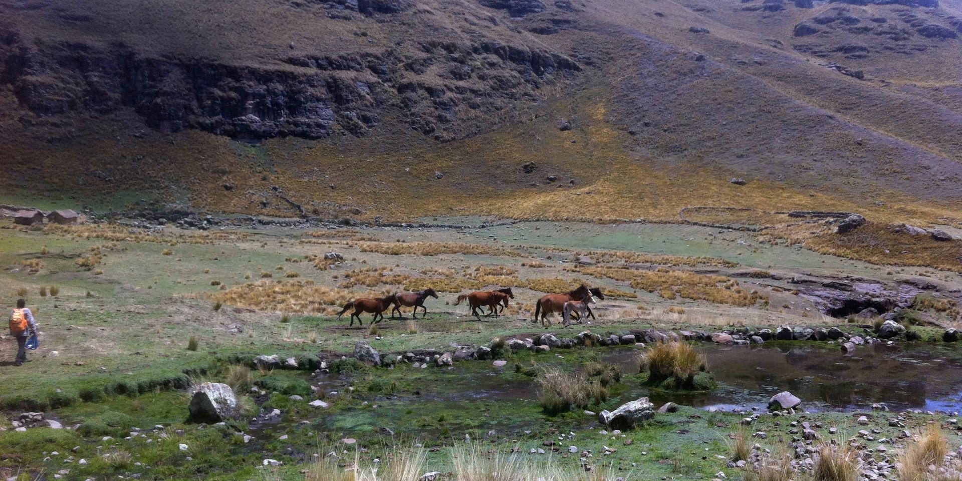 Peru Apus