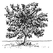 Tree 2_NanriStudio.jpg