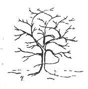 Tree 4_NanriStudio.jpg