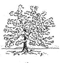 Tree 1_NanriStudio.jpg