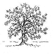 Tree 3_NanriStudio.jpg