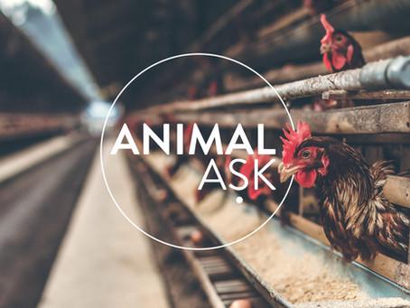 Introducing Animal Ask