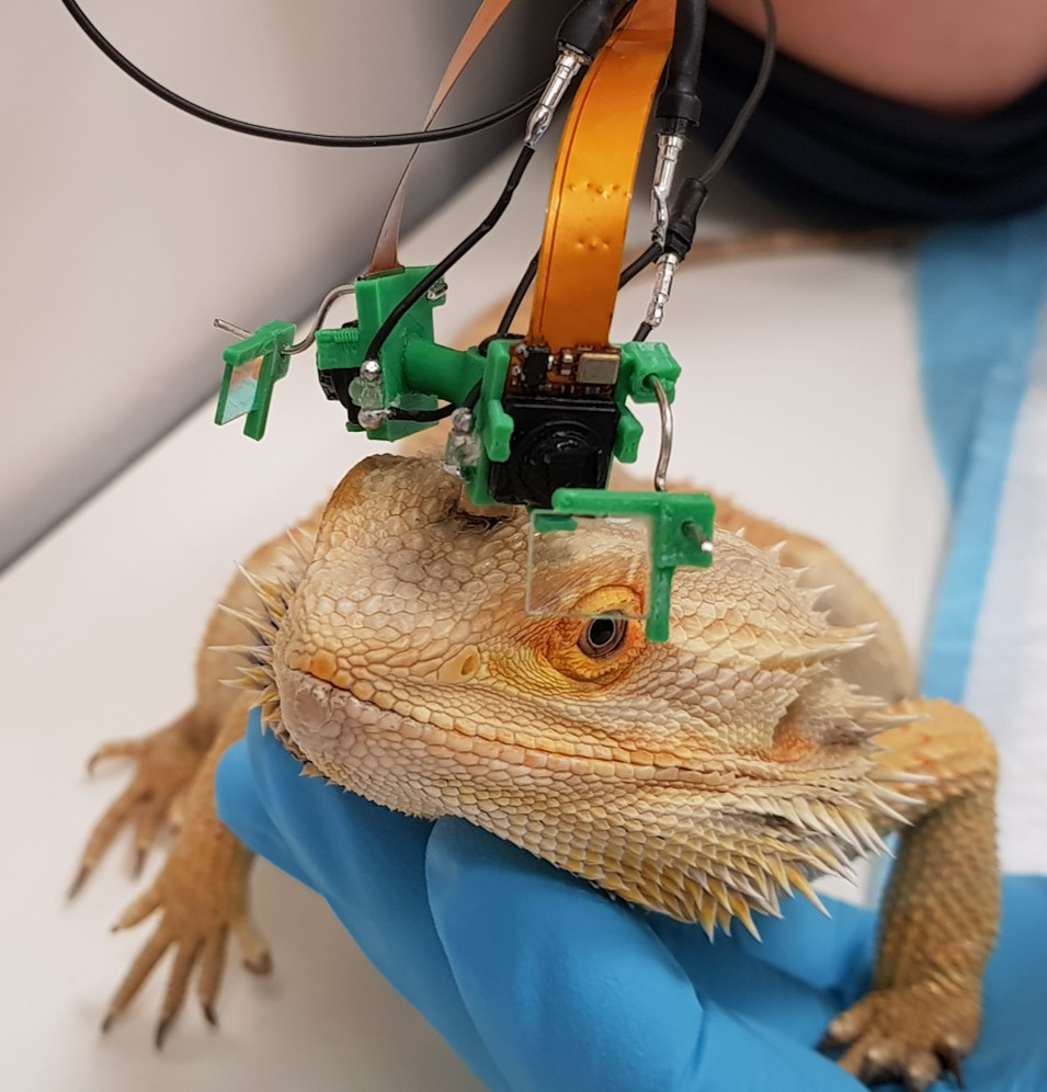 Dragon eye cam