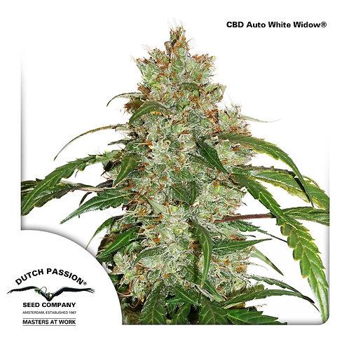 CBD Auto White Widow®