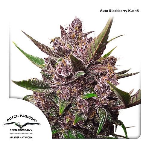 Auto Blackberry Kush®