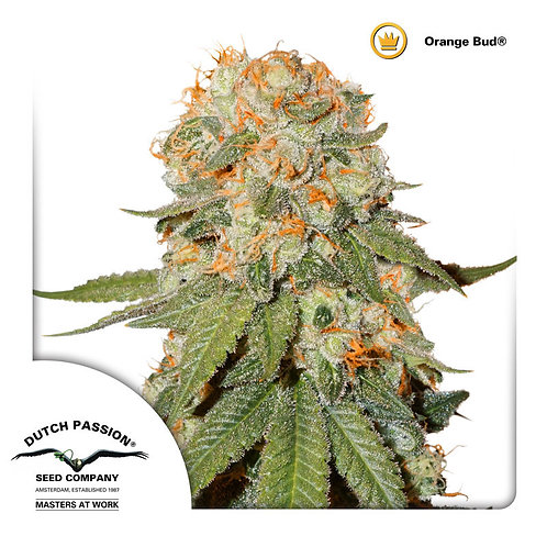 Orange Bud®