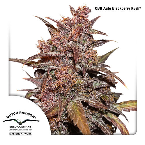 CBD Auto Blackberry Kush®