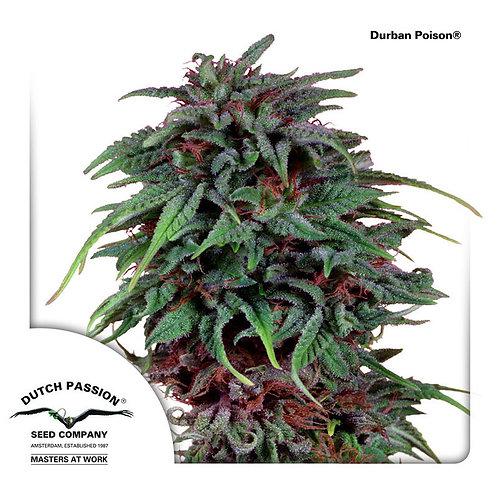 Durban Poison®