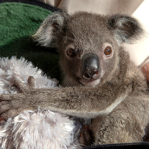 Meet the animals of San Diego Zoo