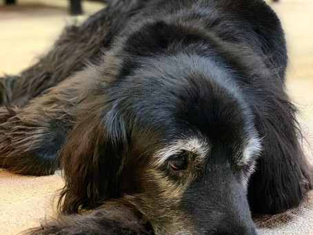 M&C Musings: Don't keep a dog and bark yourself