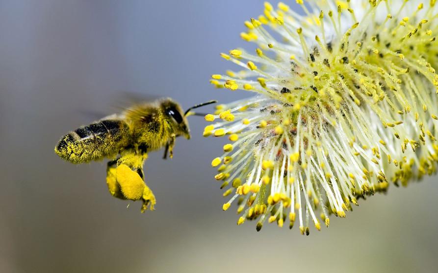 η ταχύτητα των μελισσών που χρονολογείται
