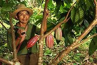 Belize Chocolate | Chocolate Tours