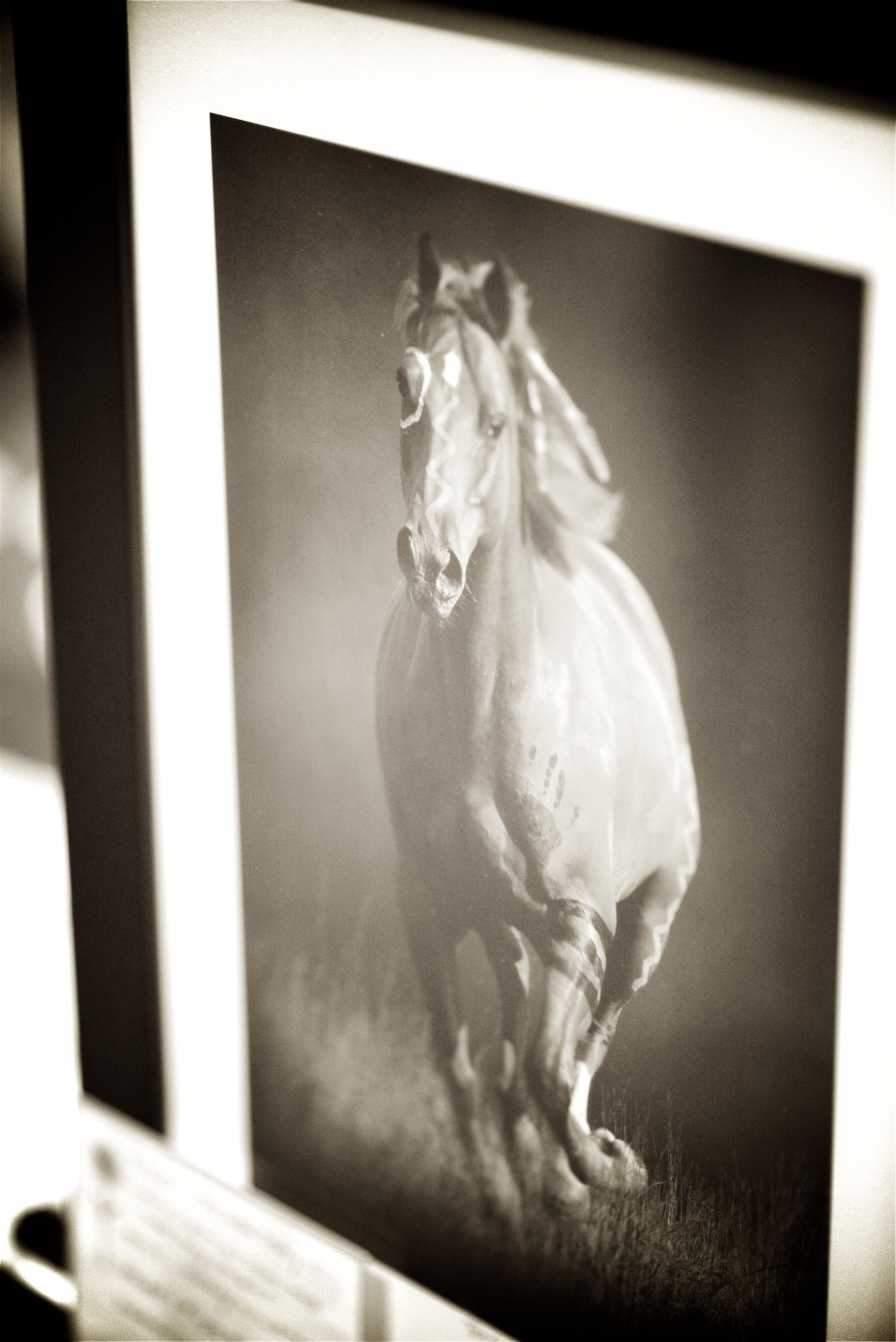 Anthony David Mesler Photography