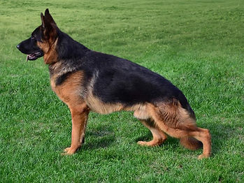 Dog Grass Update 03052021.JPG