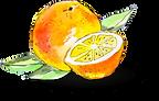 Orange-2.png