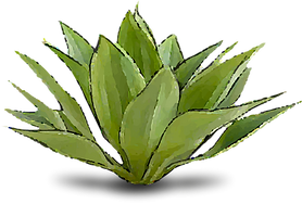 agave.png
