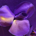detail iris