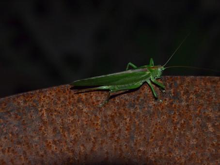 De zomer van de vliegende insekten