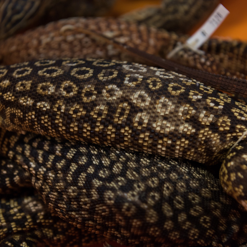 Goannas from the collection stores