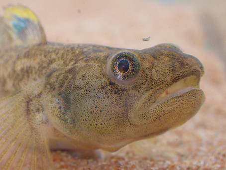 FINKE YOU KNOW THIS FISH?