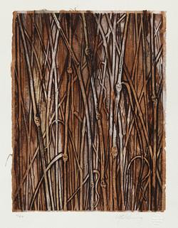 Speargrass.jpg