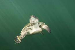Turtle Territory