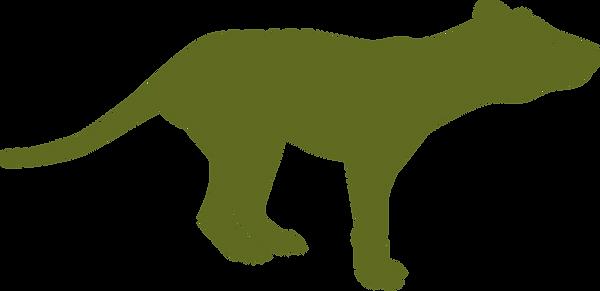 thylacinus.png