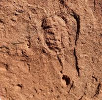 Rare Marine Arthropod Fossil