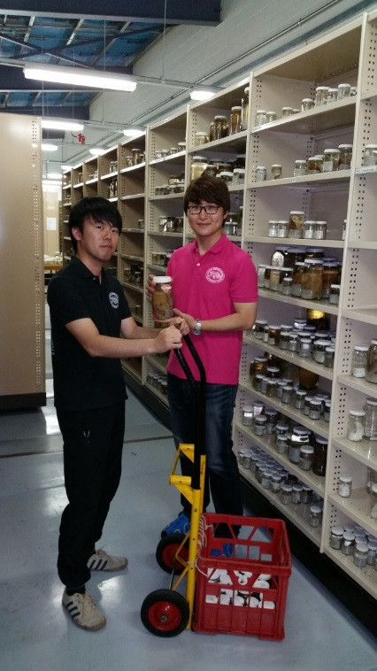 Students Satokuni Tashiro (left) and Byeol Jeong from Kagoshima University in Japan examining specimens in the MAGNT Natural Sciences wet store