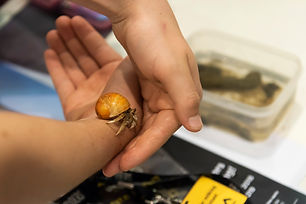 181003_LiveCritters_020.jpg