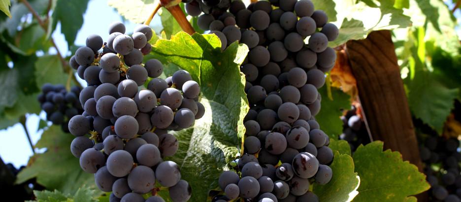 cruising sonoma: Wine Tasting at Sebastiani
