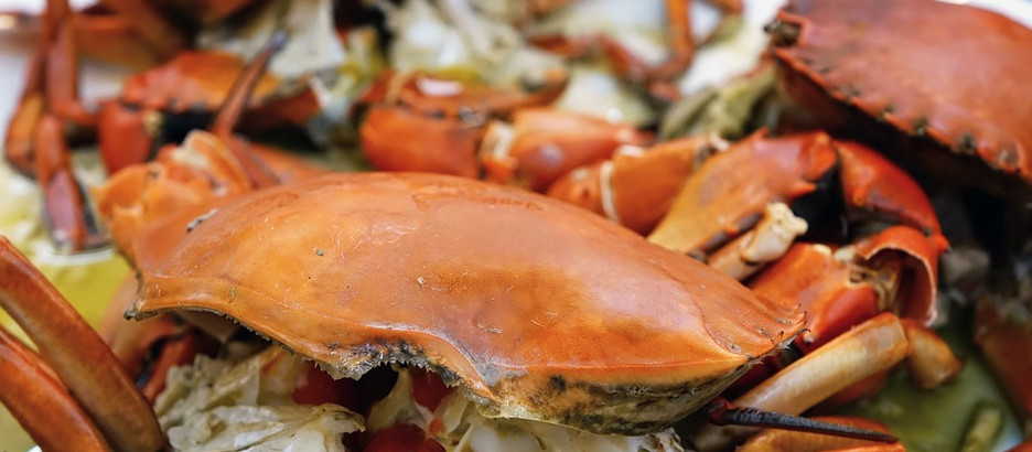 Dungeness Crab Season is Back!