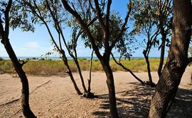 Azembay Forêt