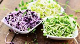 Guide complet des graines germées et leurs qualités nutritionnelles