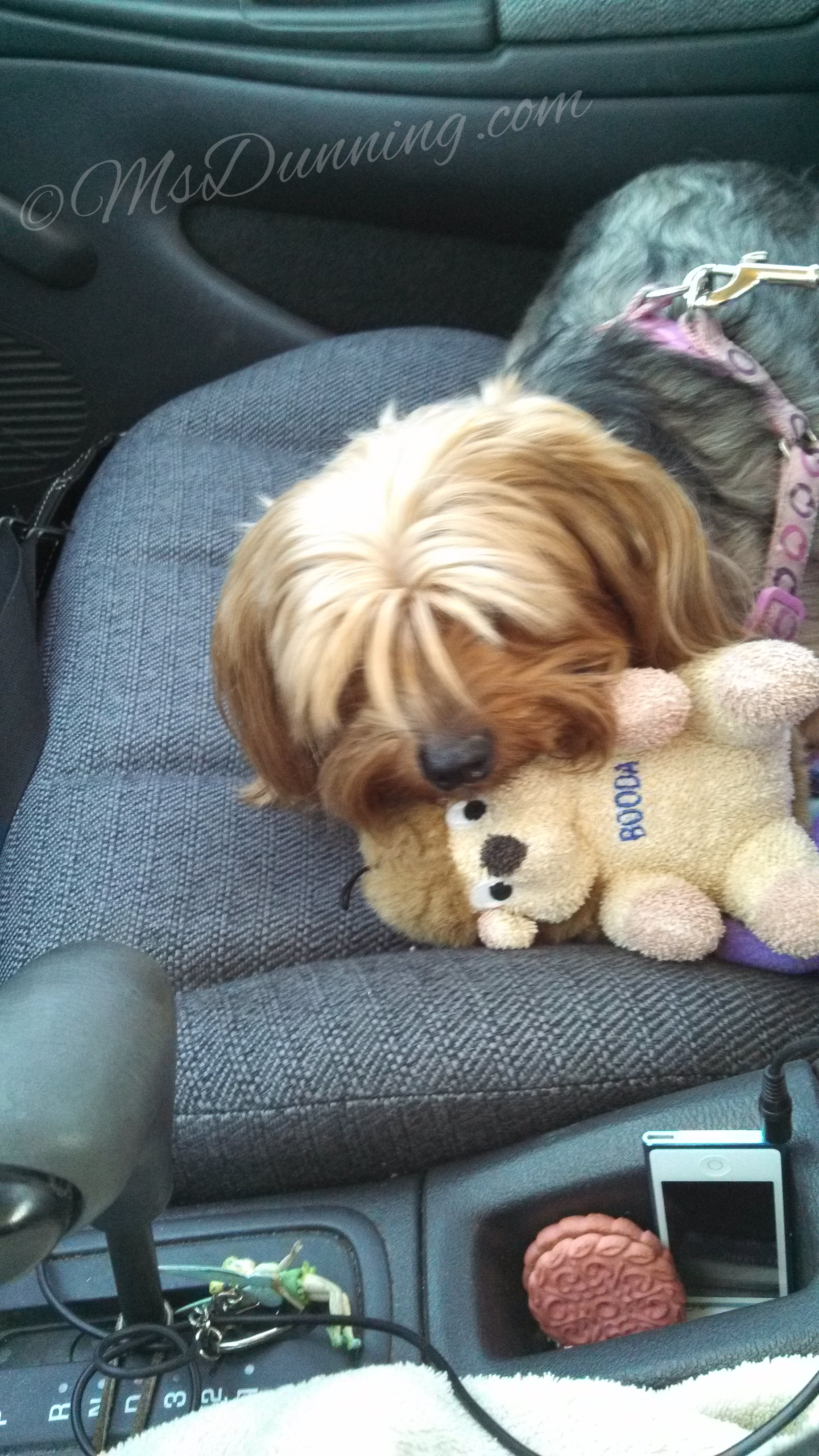 Tink in the car
