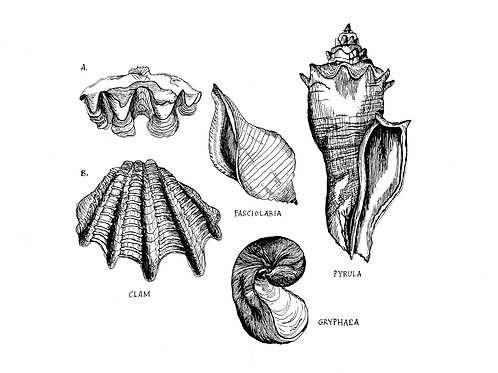 Shell We