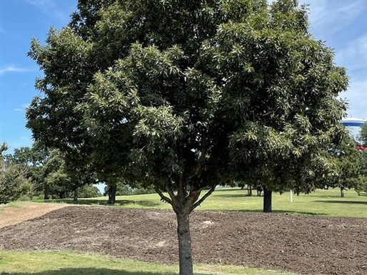 Tree Up, Denton!