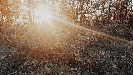 649-Zonlicht-bos-stralen-1920-Fotos-voor