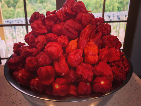 What do we do with all those chillis?