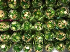 Pickled Jalapeno time