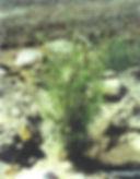 bareroot1.jpg