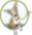 Diggin Doggies Home Page