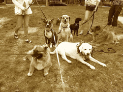 web site dog photo