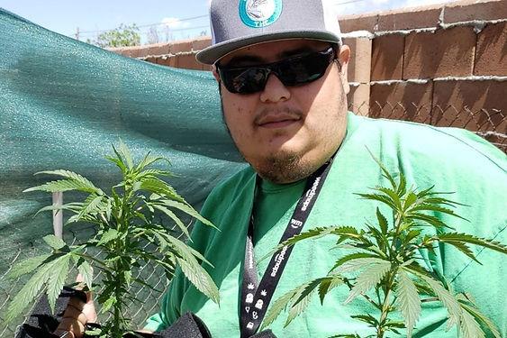 cannabis-grows.jpg