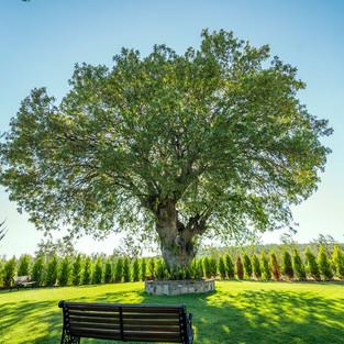 Garip Dede Ağacımız