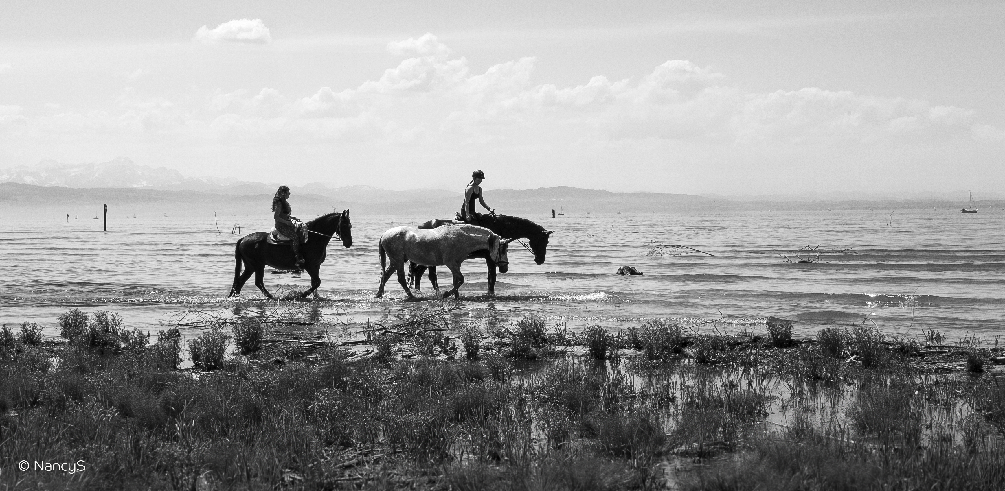 160512_NancyS Photography_Bodensee_Horse