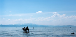 Bodensee&Pferde