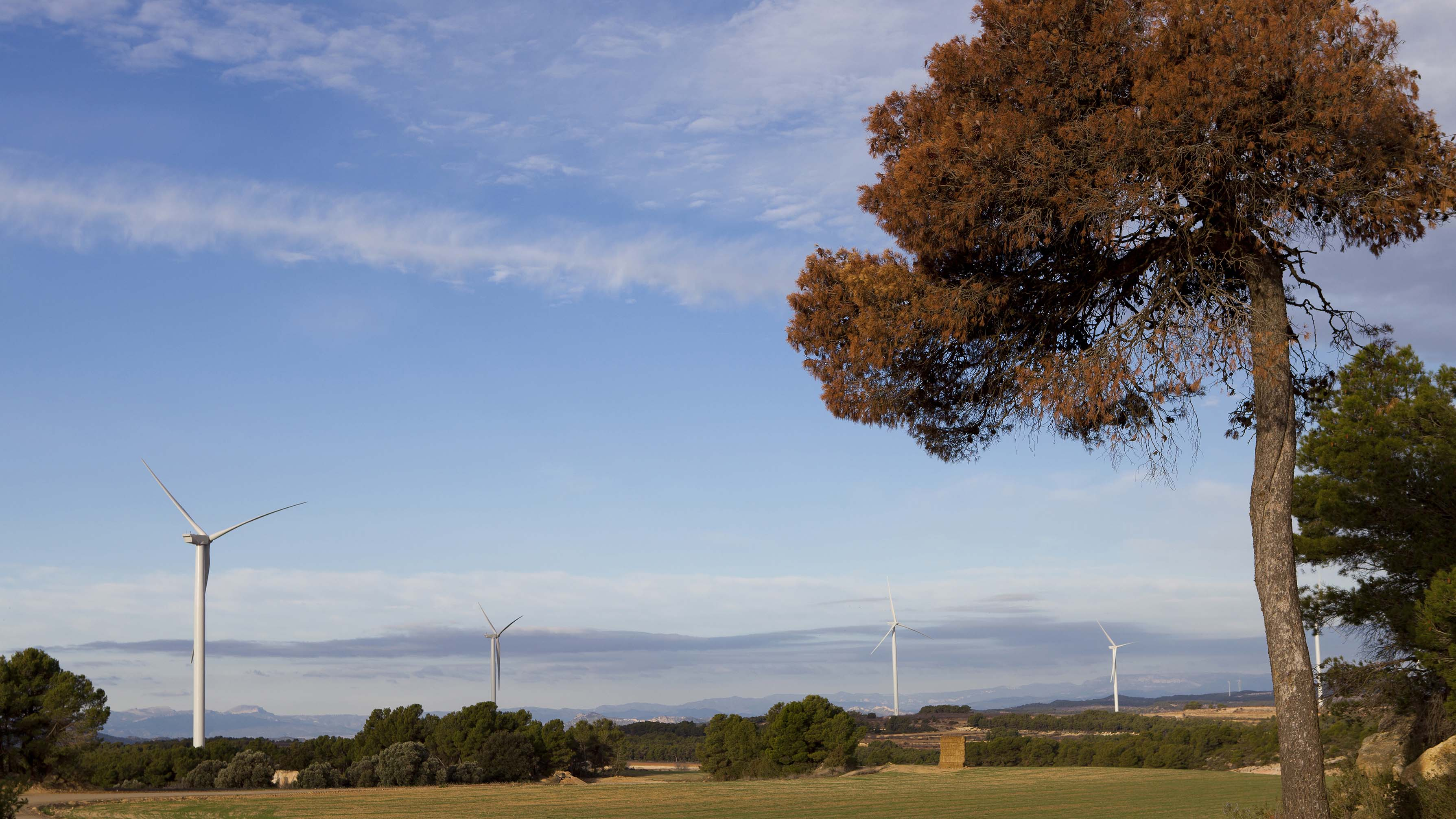 Windfarm Torre Madrina, Spain