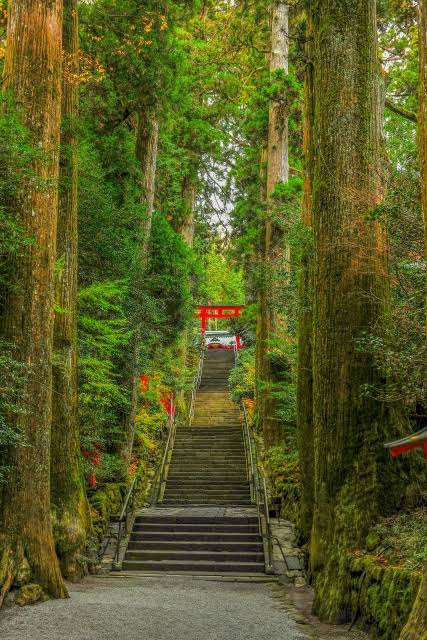 Hakone Shrine & Cedars